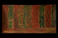 Redwoods 014